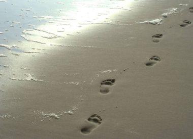 AAPO, sable, pas