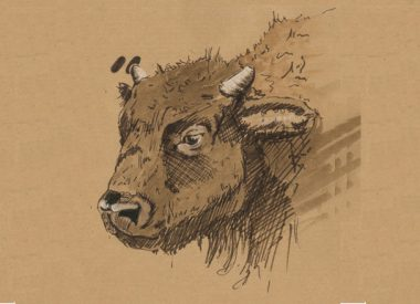 Carnet animalier, zoom sur bison, Illustration d'Isabel Maina