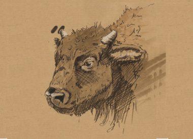 Carnet animalier, zoom sur bison, Illustration d'Isabel Maina