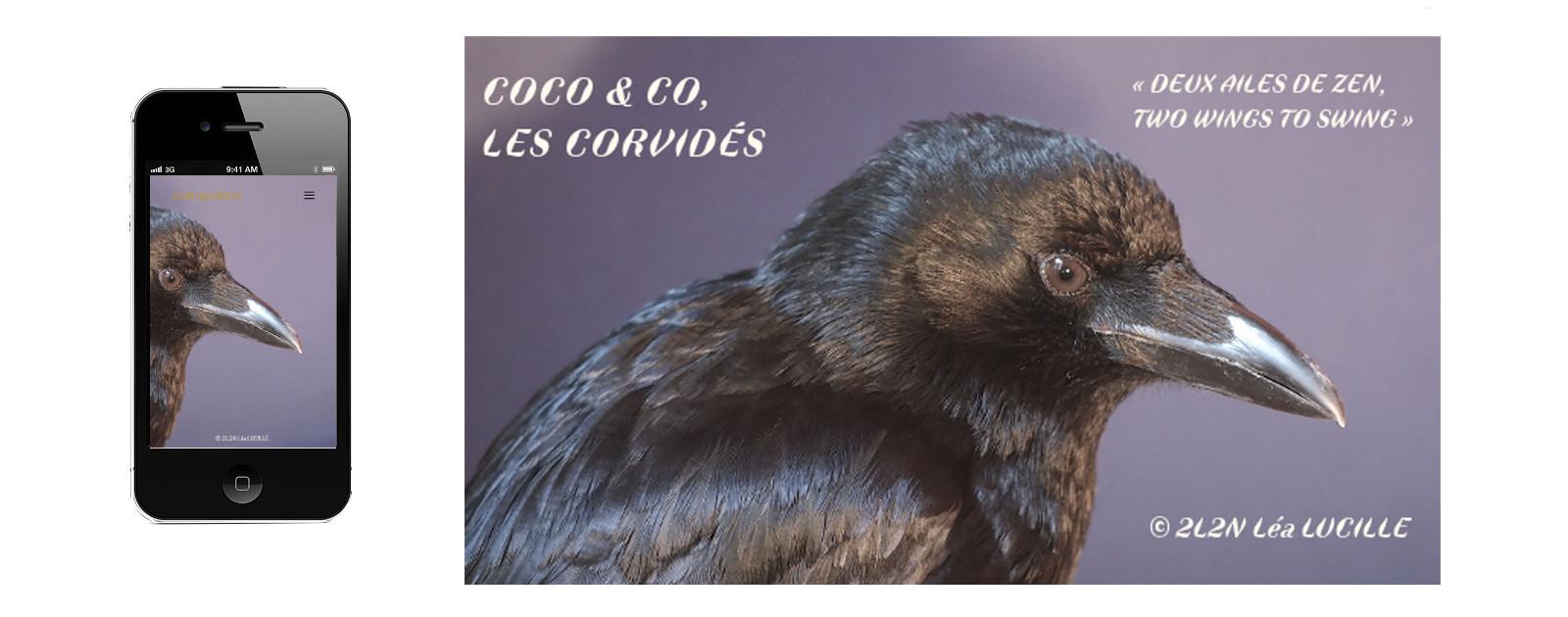 <a href='http://www.netalinea.fr/premiere/coco-co-les-corvides/'></a>